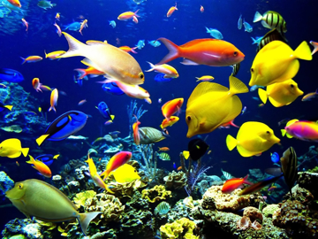 Picture for category Reef Fish