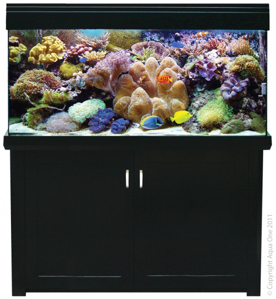 Picture of Living Reef 400