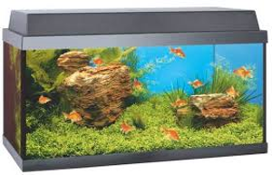 Picture of Juwel Korall 60 Goldfish
