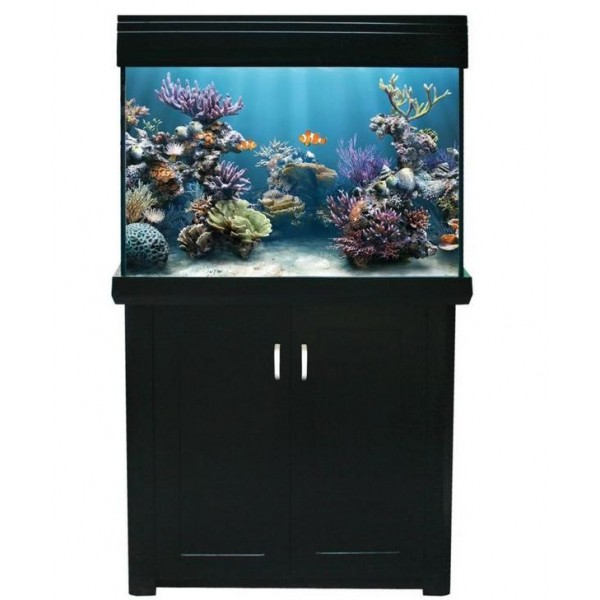 Picture of Living Reef 300