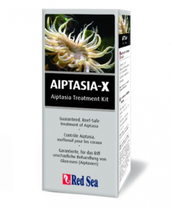 Picture of Aiptasia X. Red Sea.